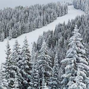 Vail Snow Trees 8
